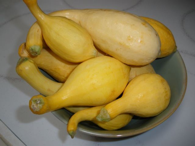 Got Squash?  Fast and Easy Yellow Neck Squash Side Dish